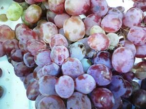 Перебираем виноград